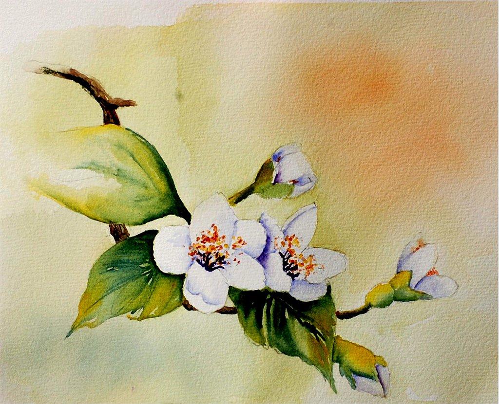 Fleurs de pruniers