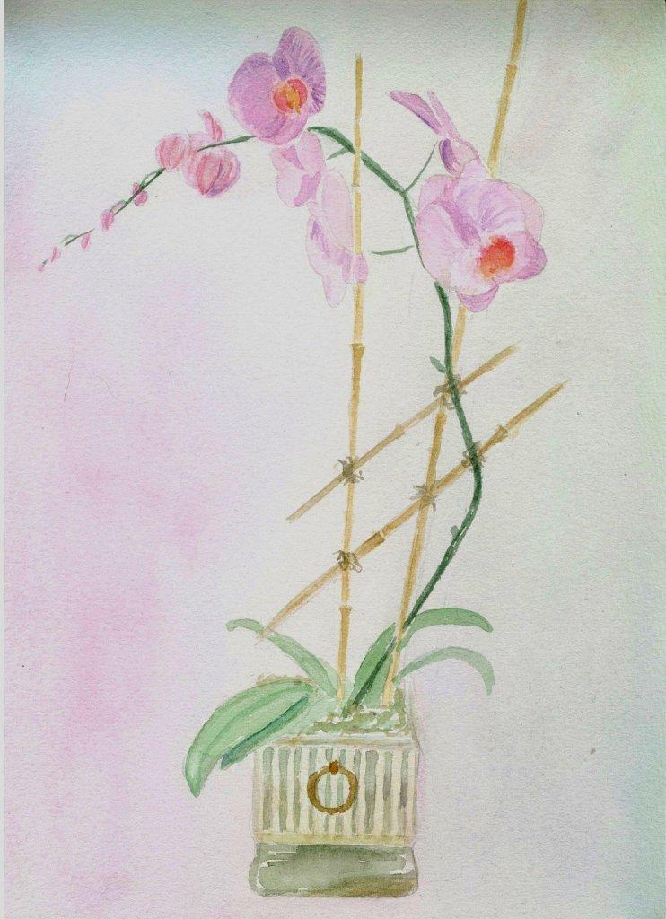 Orchidée (16/01/09)